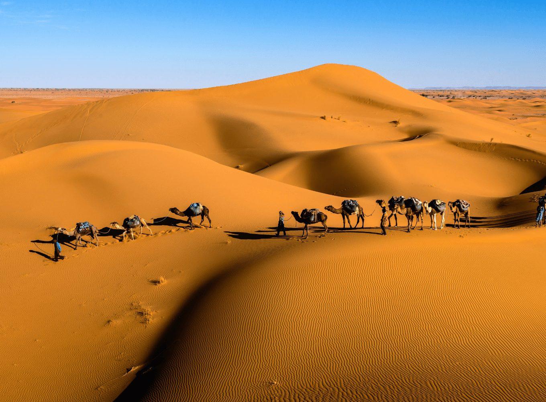 Kamele in der Wüste