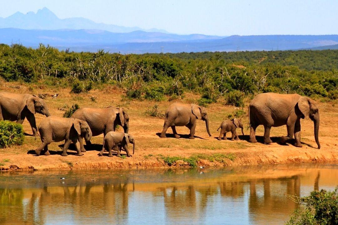 Elefantengruppe am Fluss
