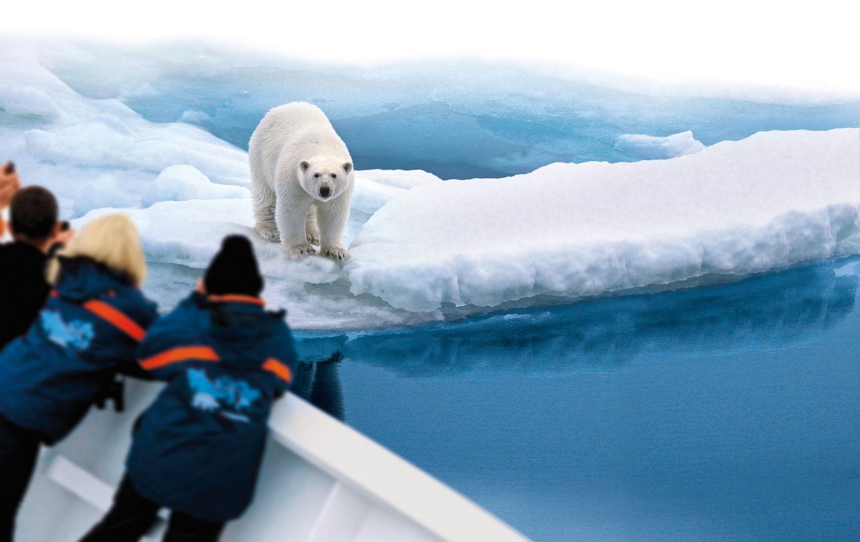 Passagiere an Bord beobachten Eisbär an Land