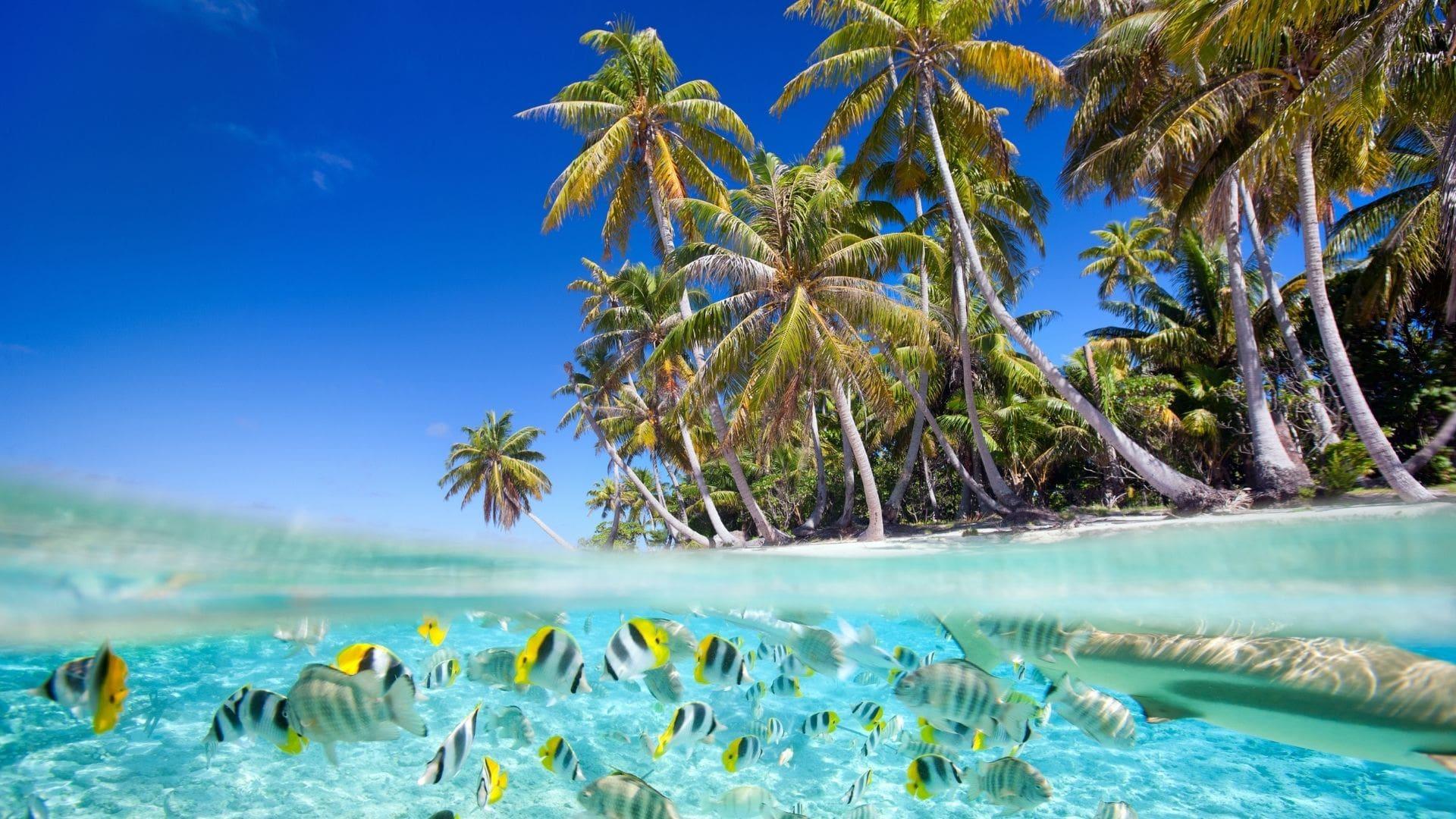 Malediven Strand mit Fischen & Palmen