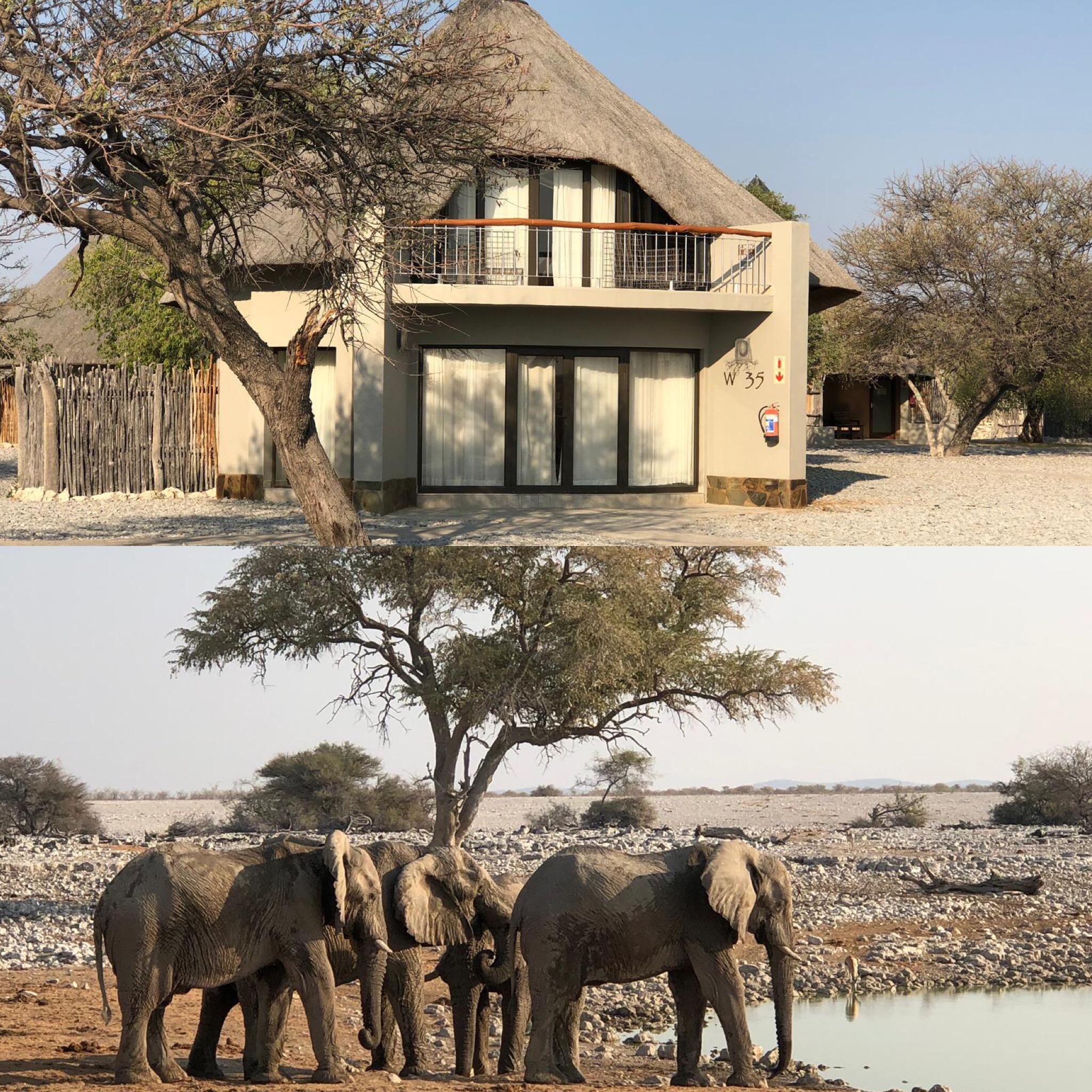 Elefanten und Lodge in Namibia
