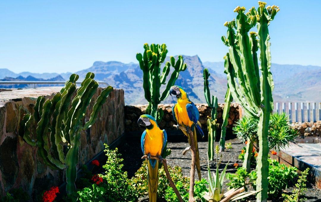 Kanaren - Papagei in Nautr