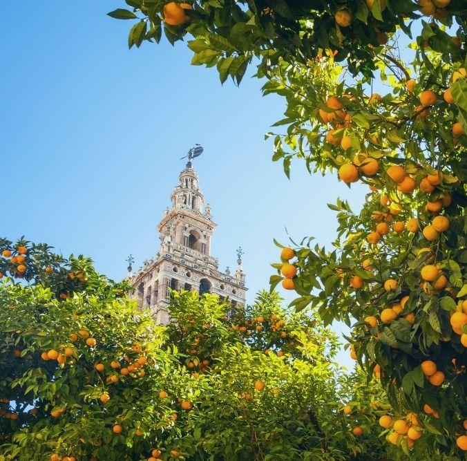 Spanien - Andalusien Orangenbaum