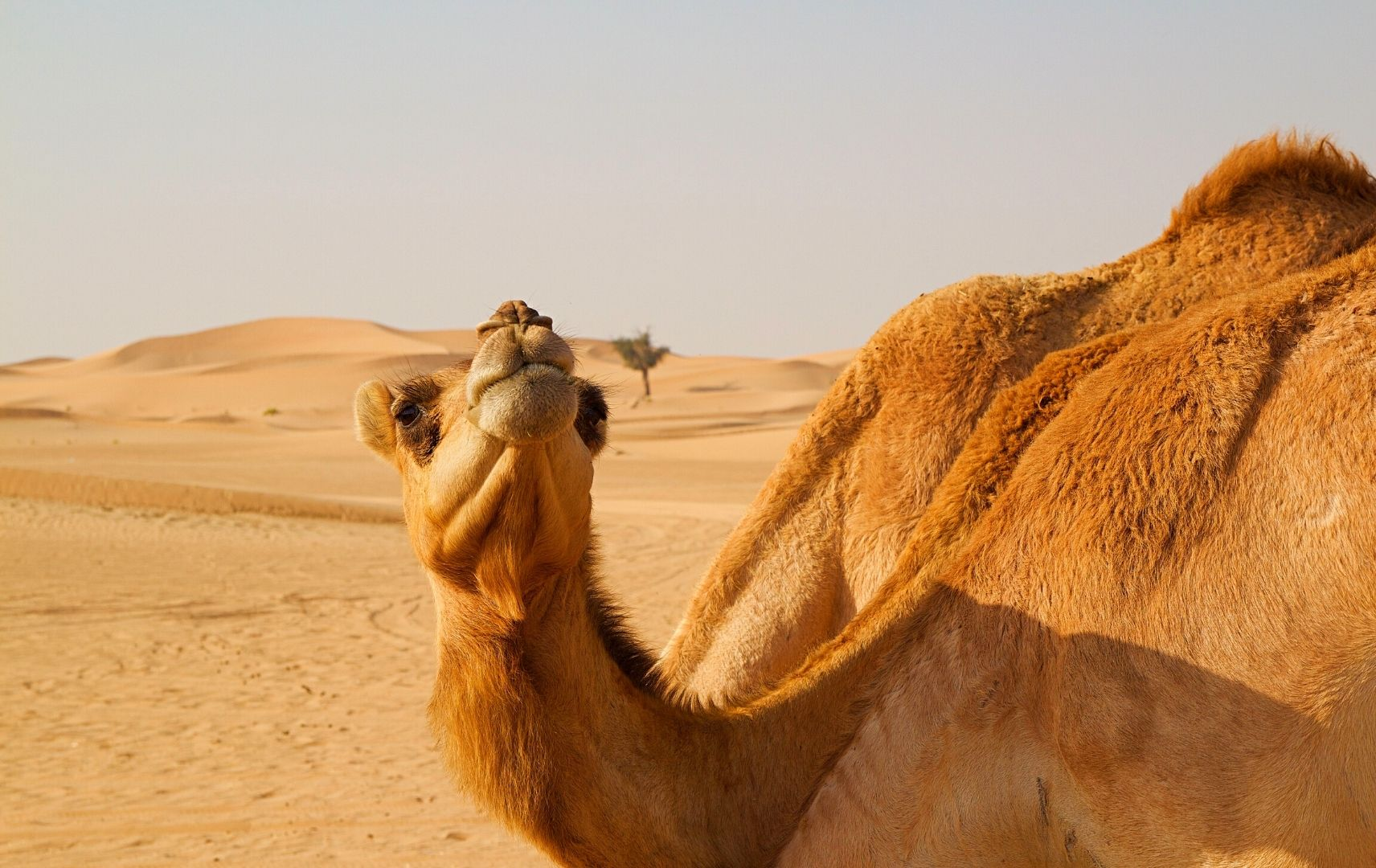 Kamel Dubai