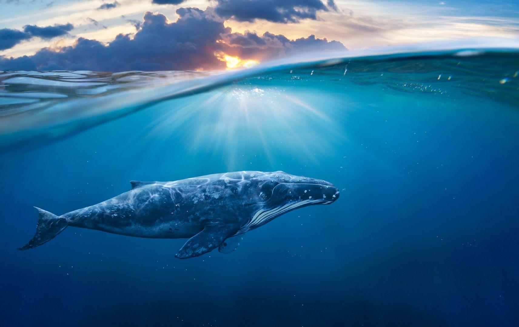 Wale Panama