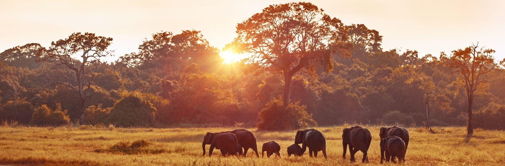 Elefanten in der Natur