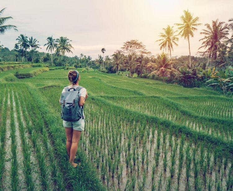 Bali Touristin in Reisterassen bei Sonnenuntergang