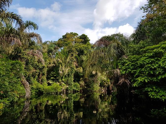 Gewässer im Urwald mit Palmen