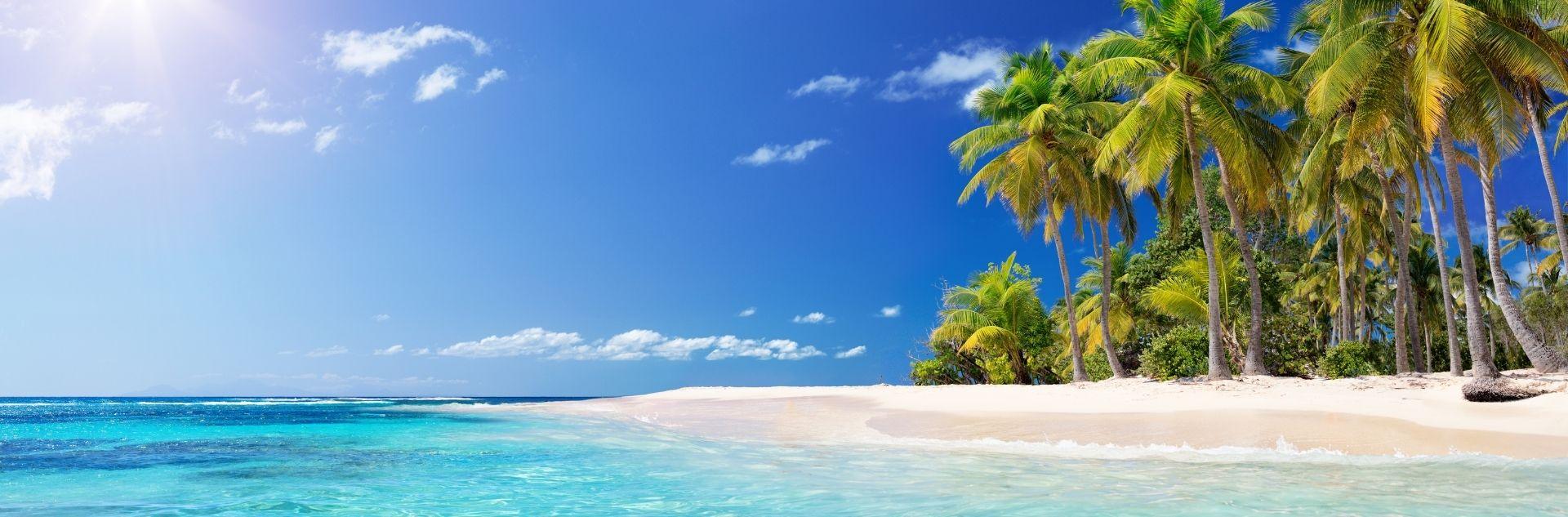 Karibik Palmen am Strand