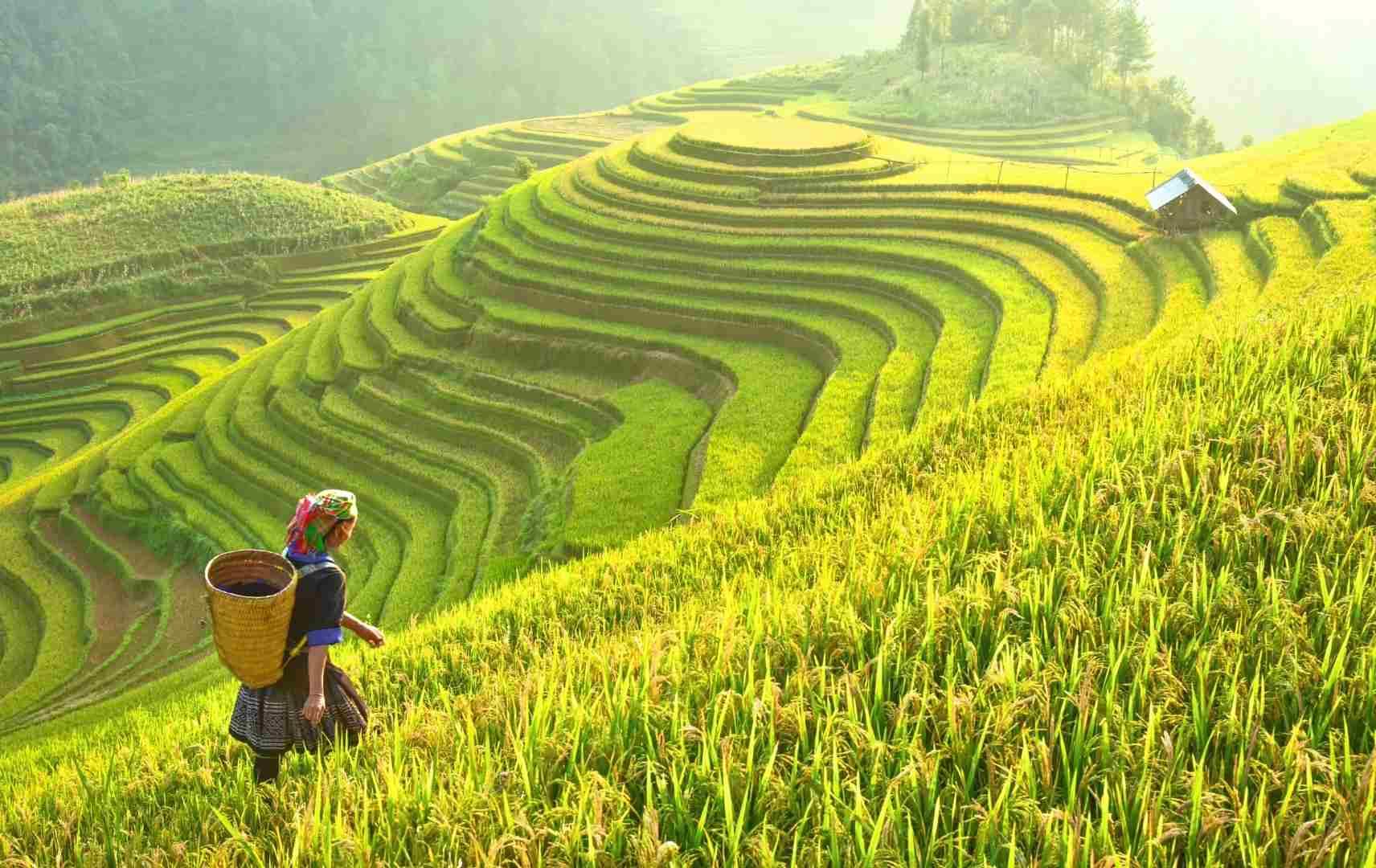 Fernreise Asien - Bali Reisterasse