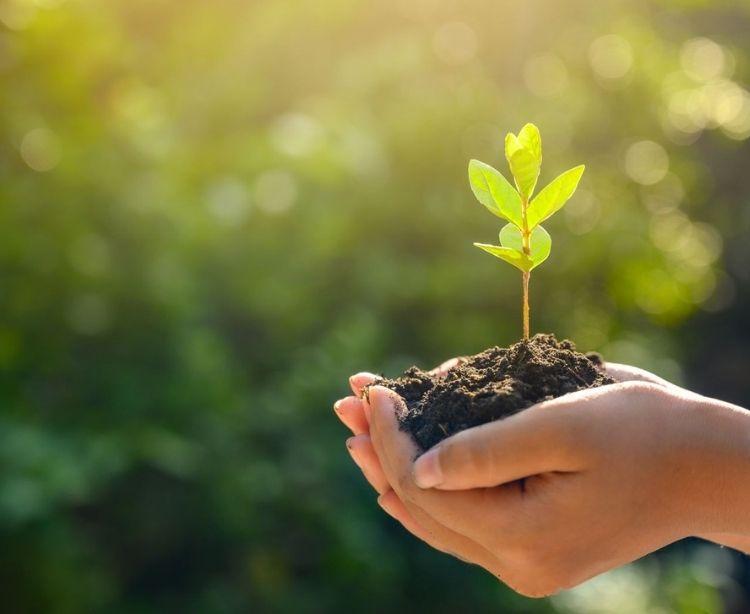 Nachhaltigkeit Green Travel - Hand hält junge Pflanze