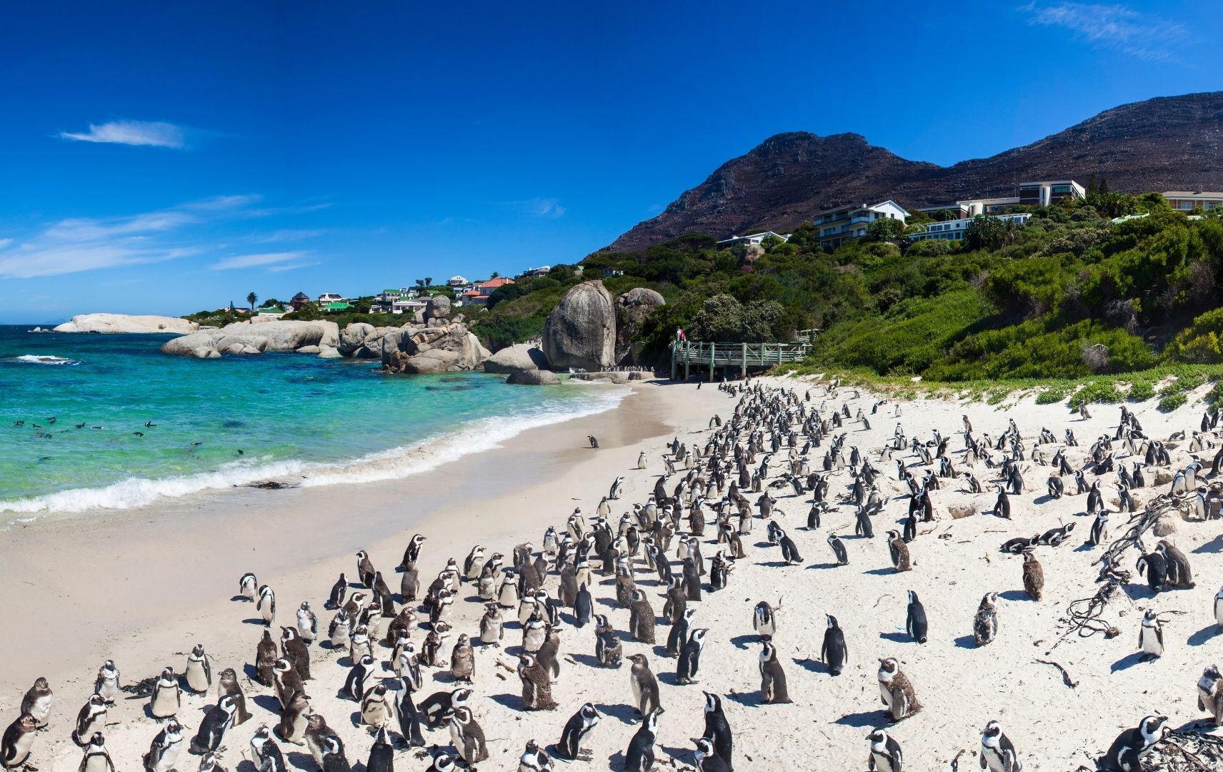 Boulders Beach in Kapstadt