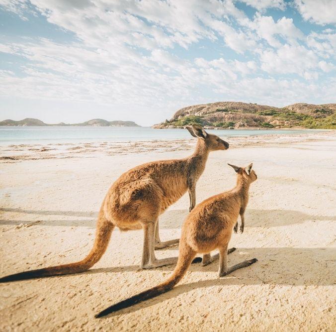 Rundreise - Australien