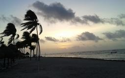 Palmen am Strand in Mexiko Tulum