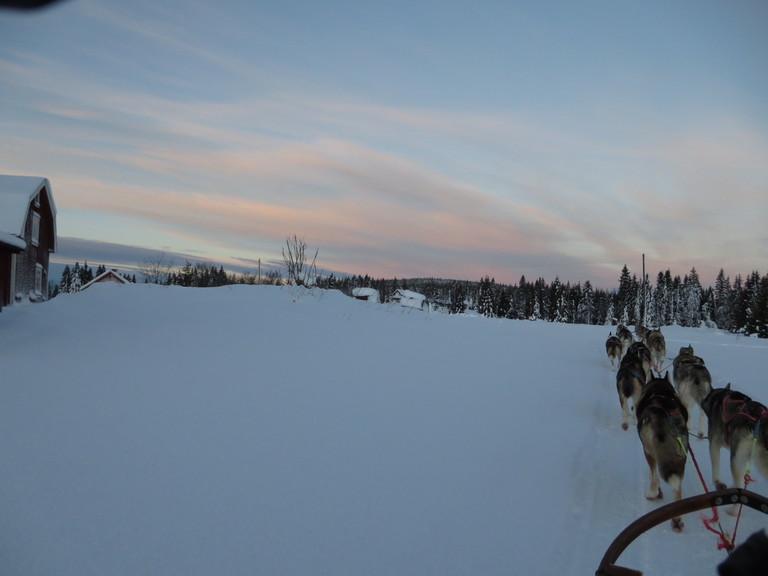 Lappland Husky Schlittenfahrt