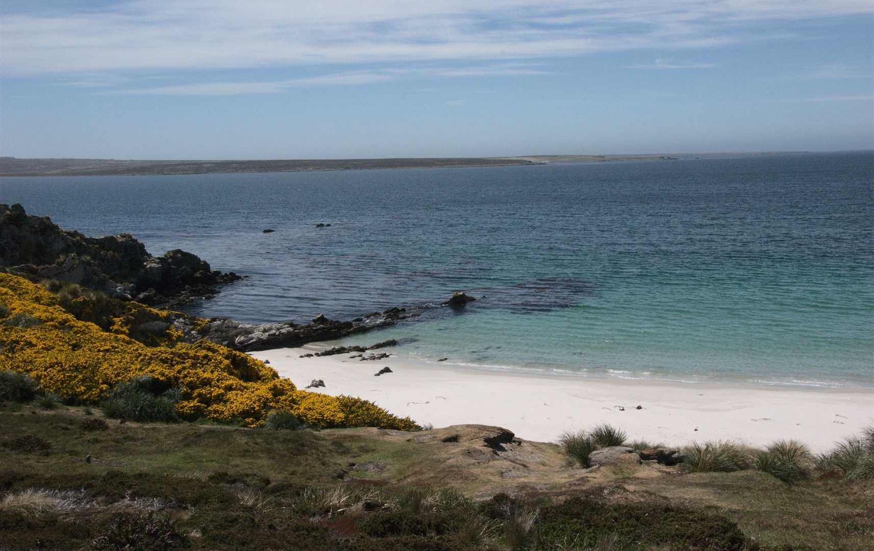 Strand & Küste auf den Falkland Islands