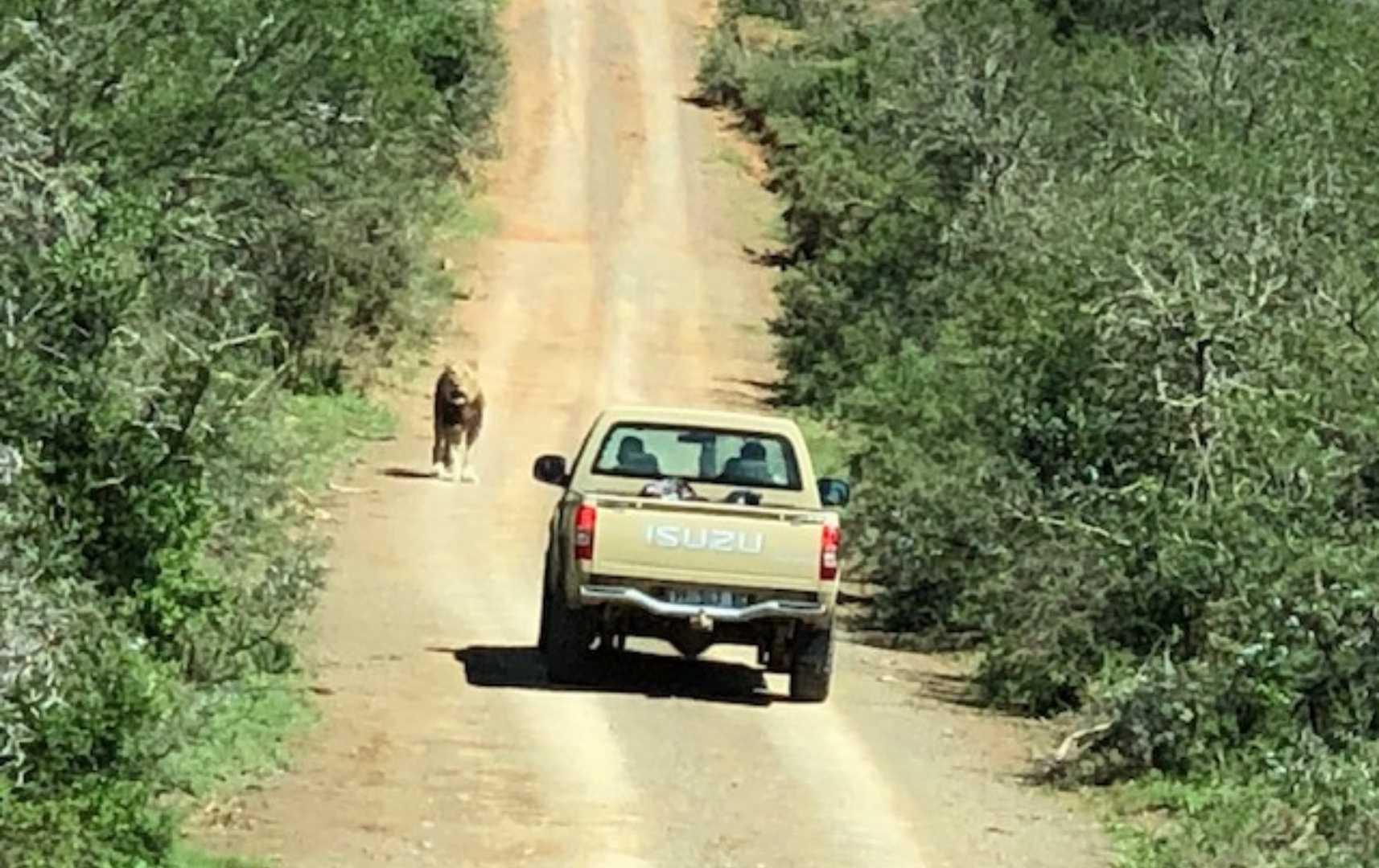 Im Jeep unterwegs Kwandwe-Südafrika