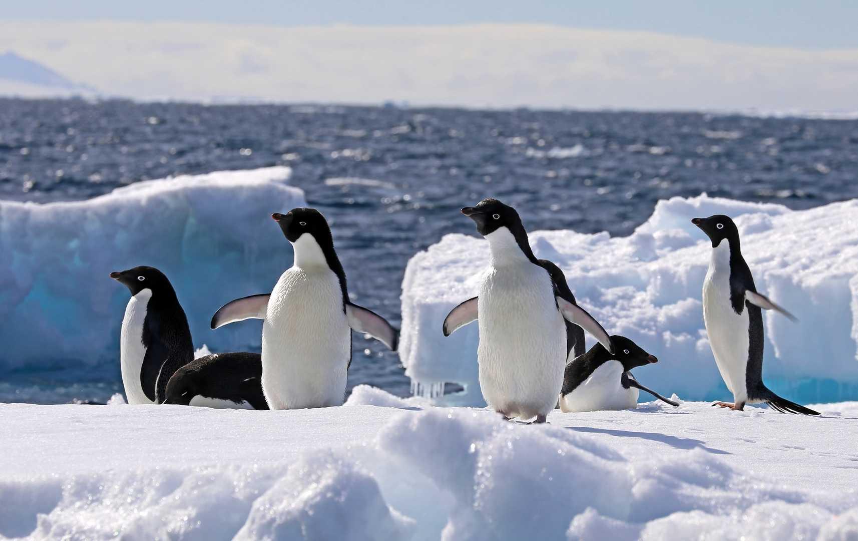 Pinguine auf dem Eis im Weddellmeer