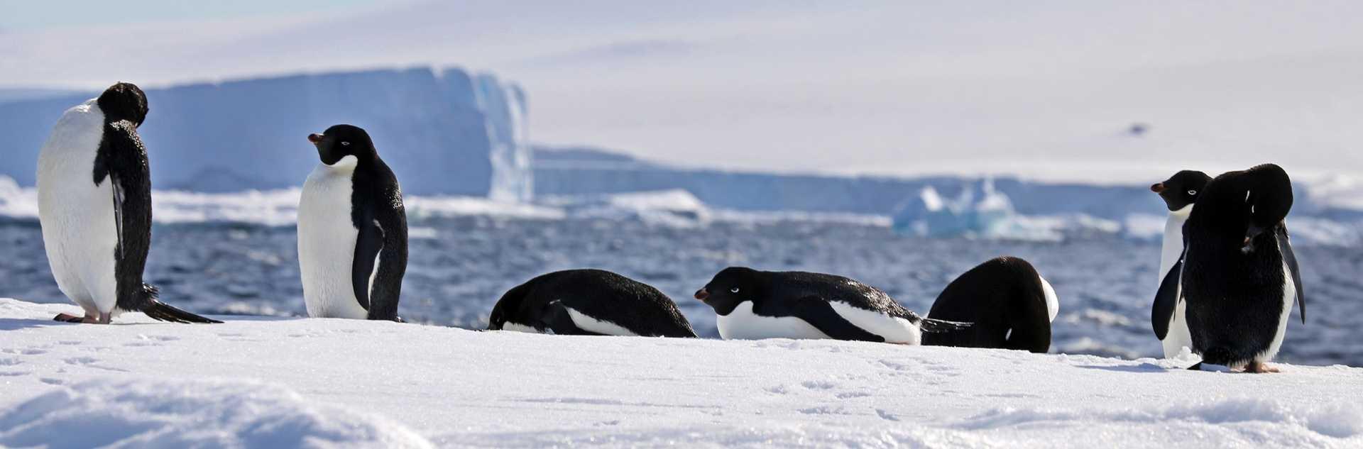 Pinguine im Eis auf Expeditionsreise beobachten