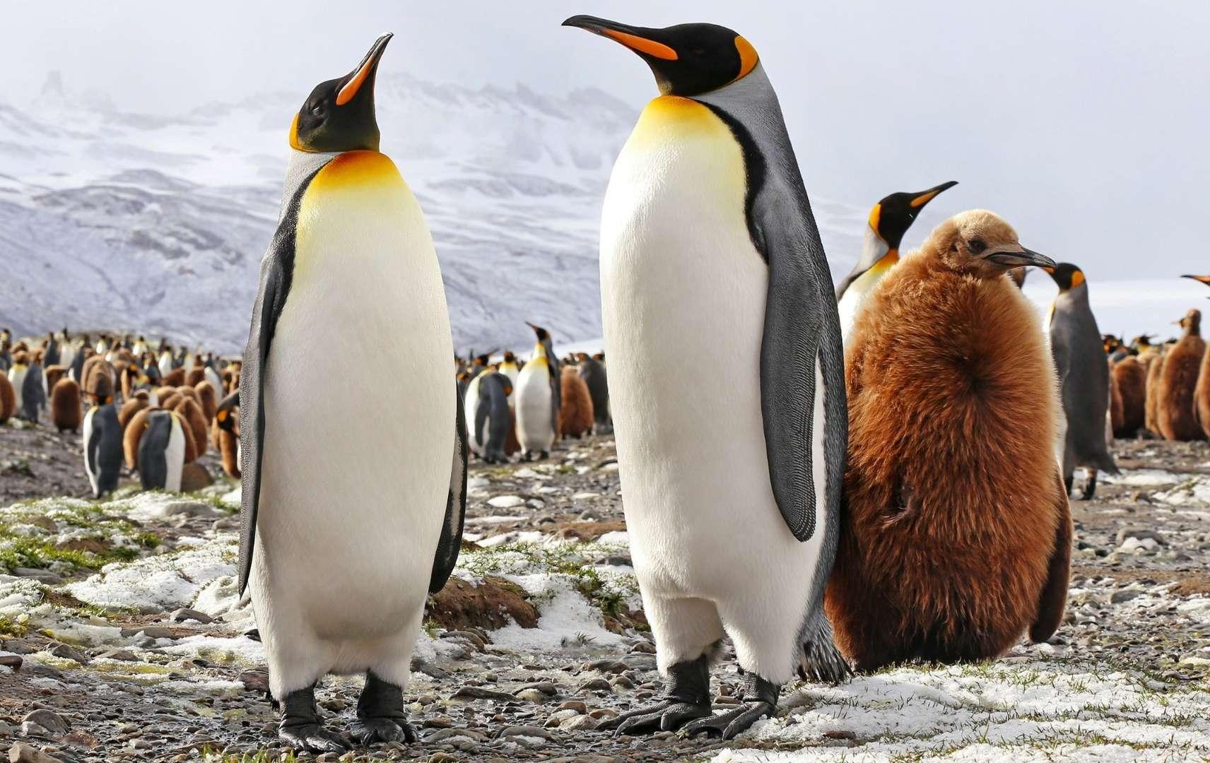 Pinguinfamilie im Eis