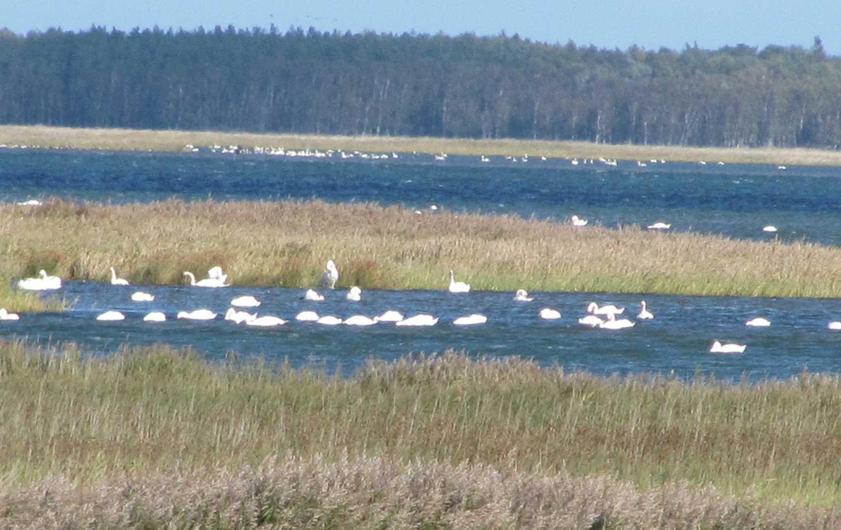 Pramort - Fischland