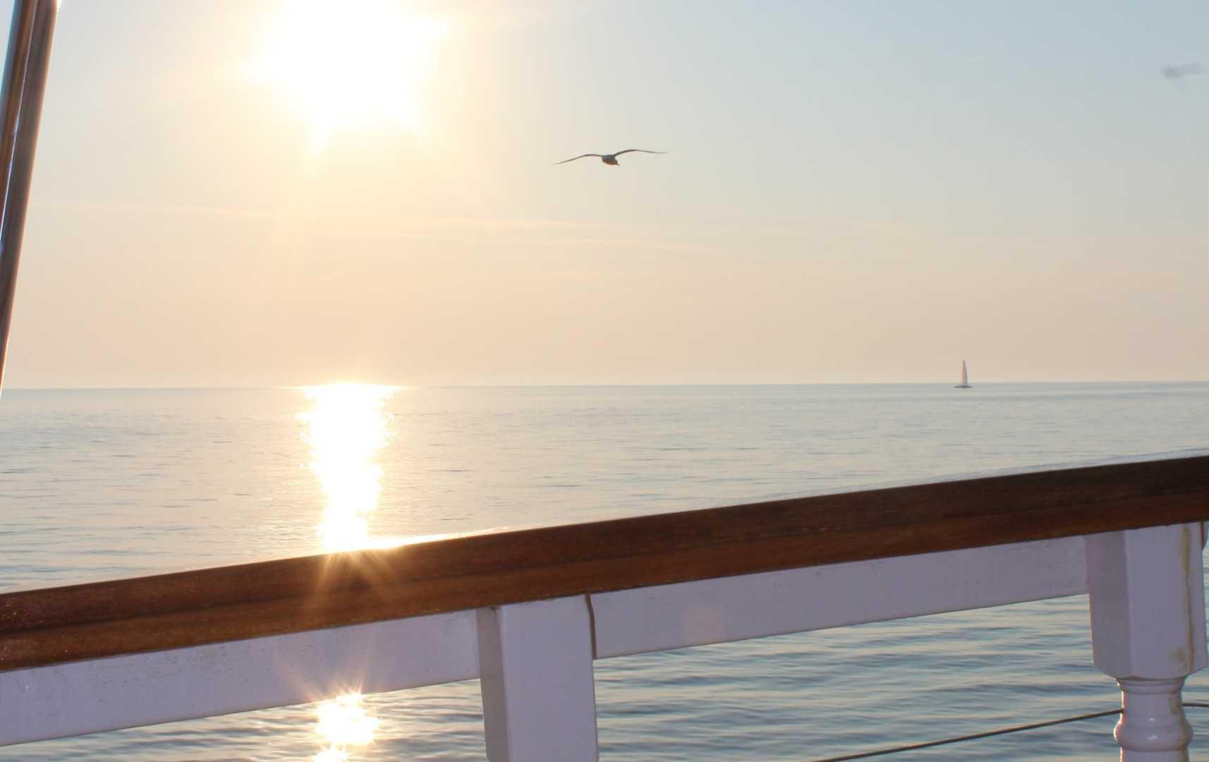 Pula Delfin-Beobachtung - Kroatien
